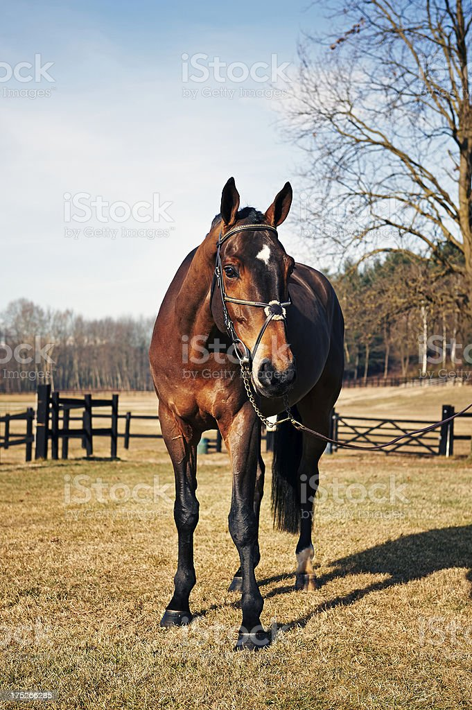 Horse. Color Image royalty-free stock photo