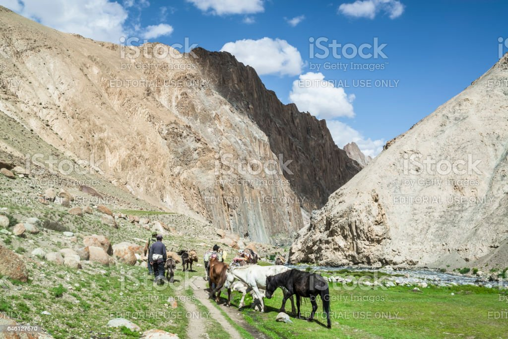 Horse convoy carrying supplies to the villages in Markha valley stock photo