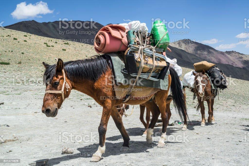 Horse convoy climbing up the Ganda La. Trekking in Markha valley (Ladakh) stock photo