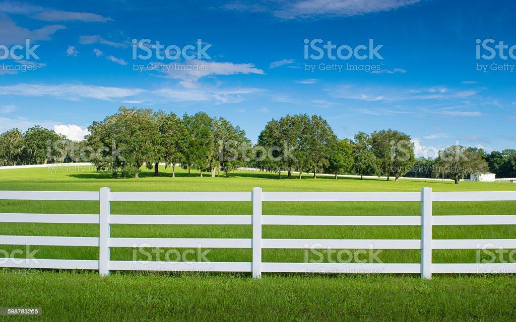 Horse Country in Ocala, Florida stock photo