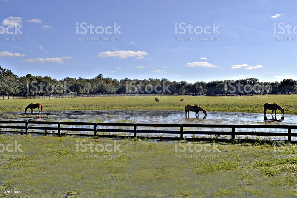 Horse Country stock photo
