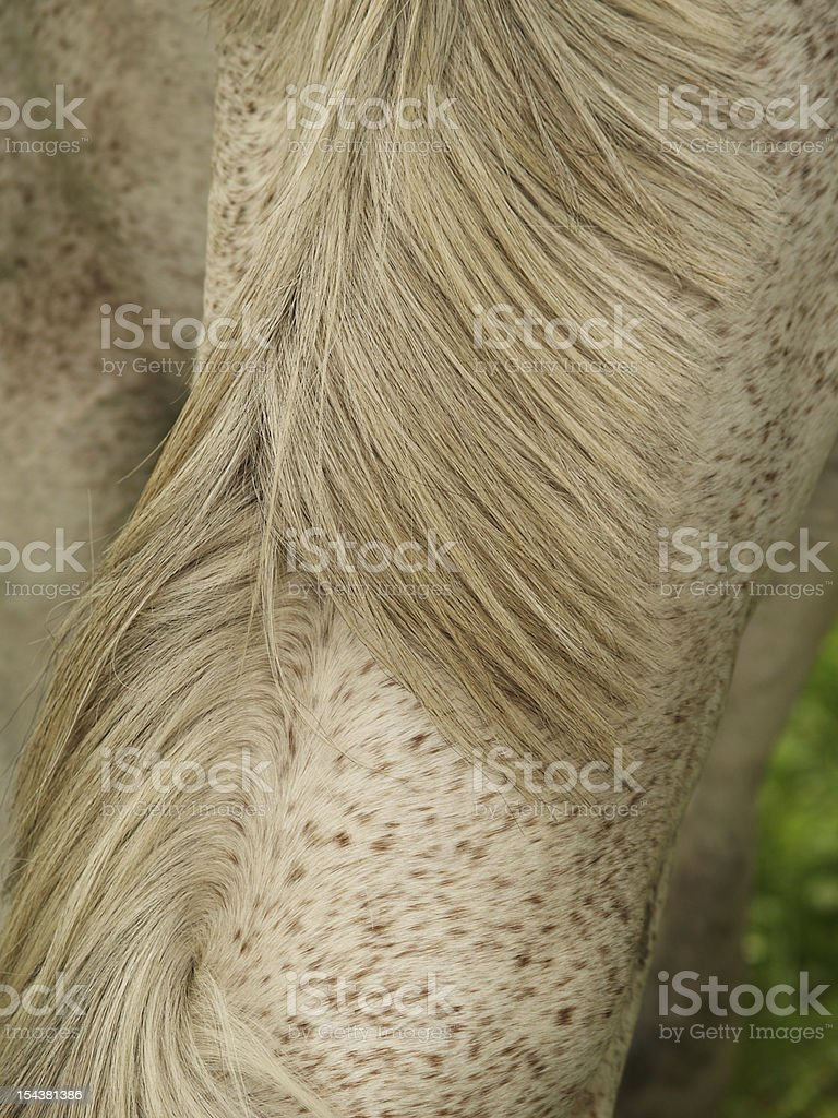 horse detail, fur and mane royalty-free stock photo