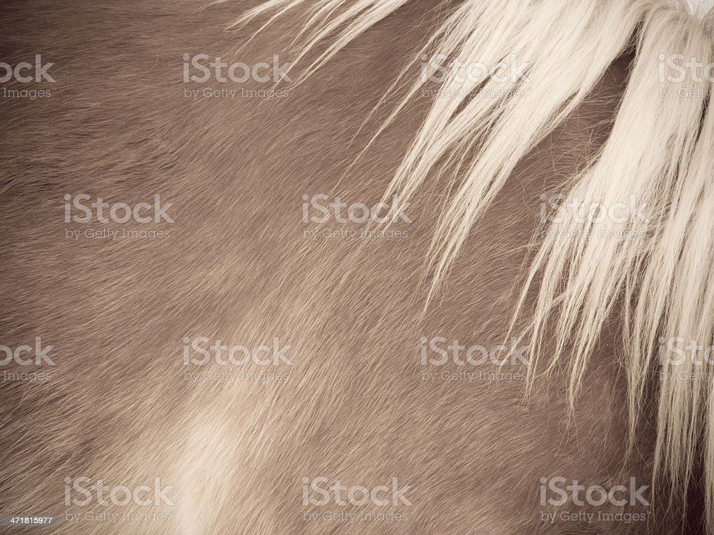 horse detail, fur and mane, side/front view royalty-free stock photo