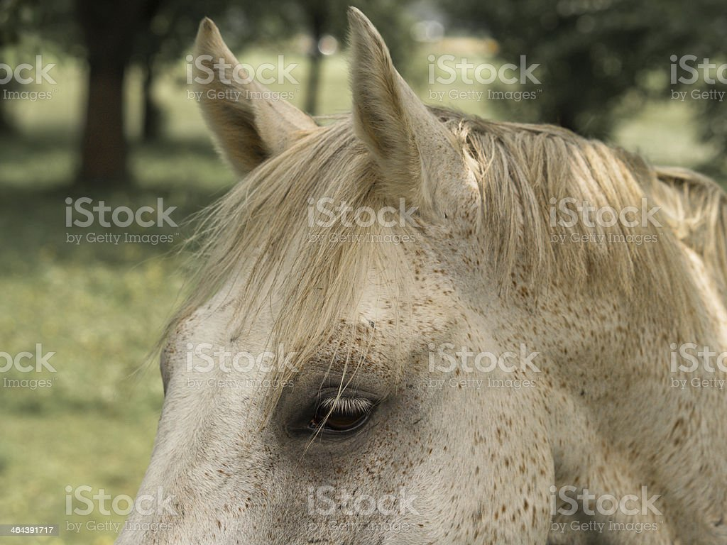 horse detail head and eye royalty-free stock photo