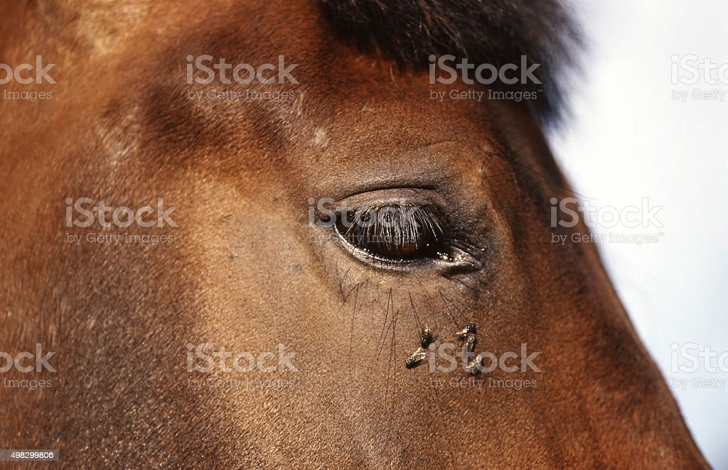 horse detail  head and eye stock photo