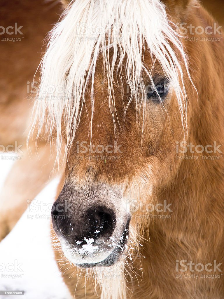 horse detail head royalty-free stock photo