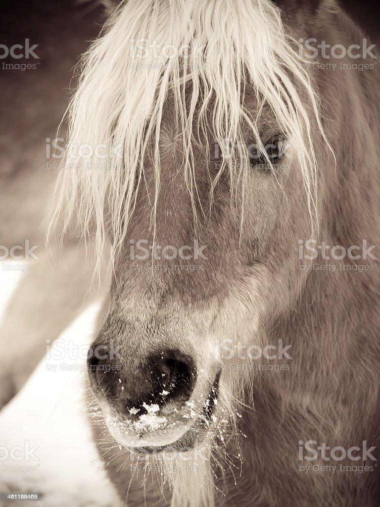 horse detail  head stock photo
