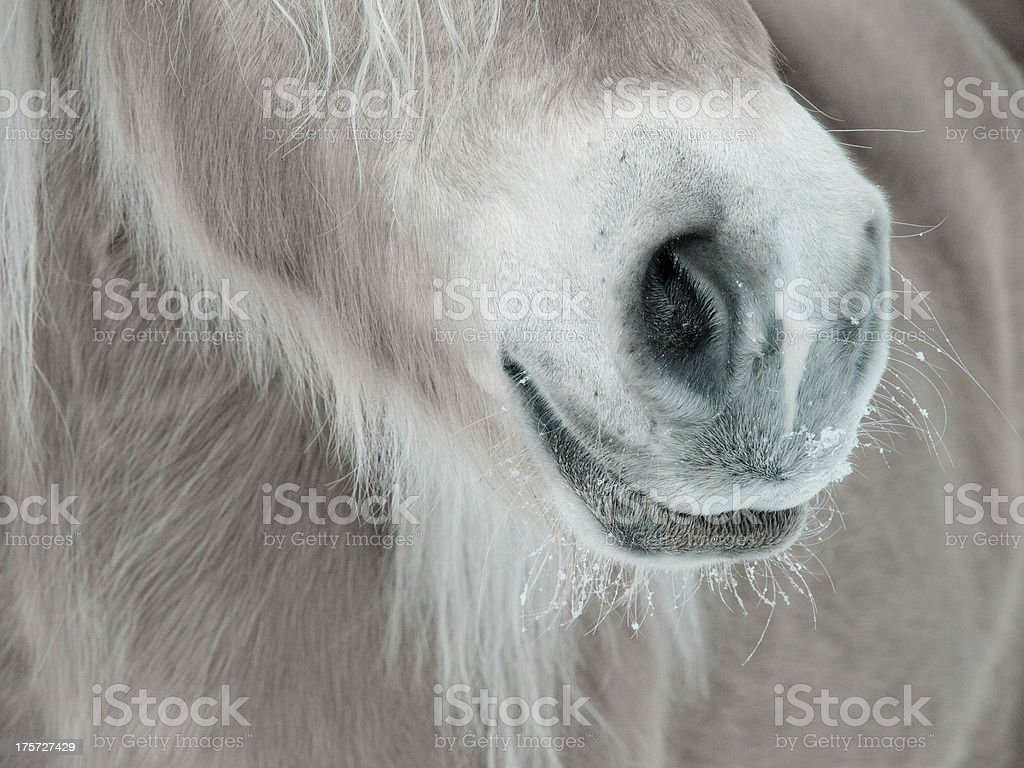 horse detail  nose nostrils and mouth stock photo