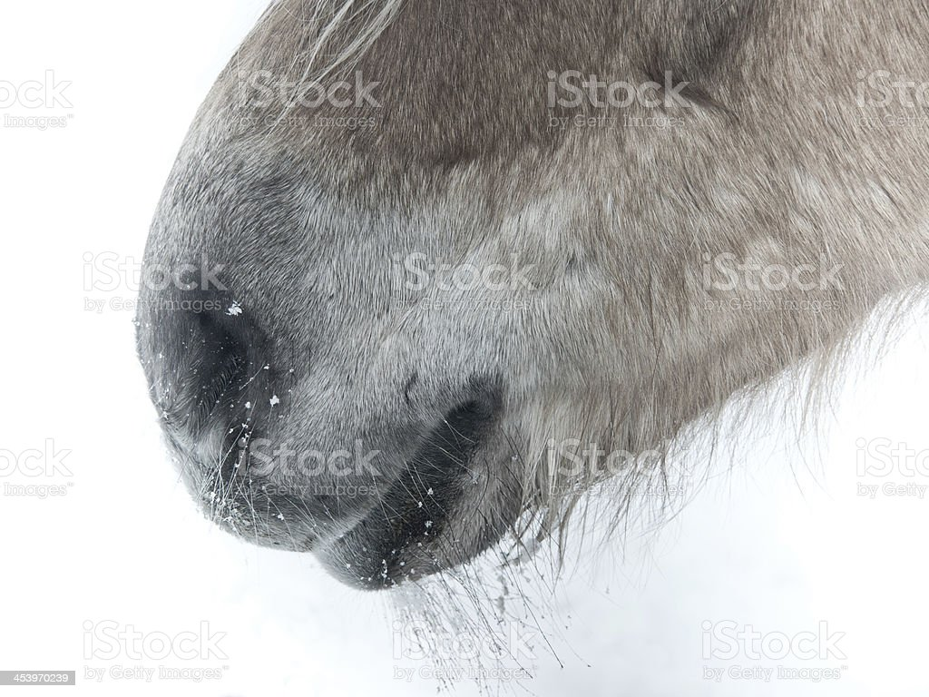horse detail, nose nostrils and mouth stock photo