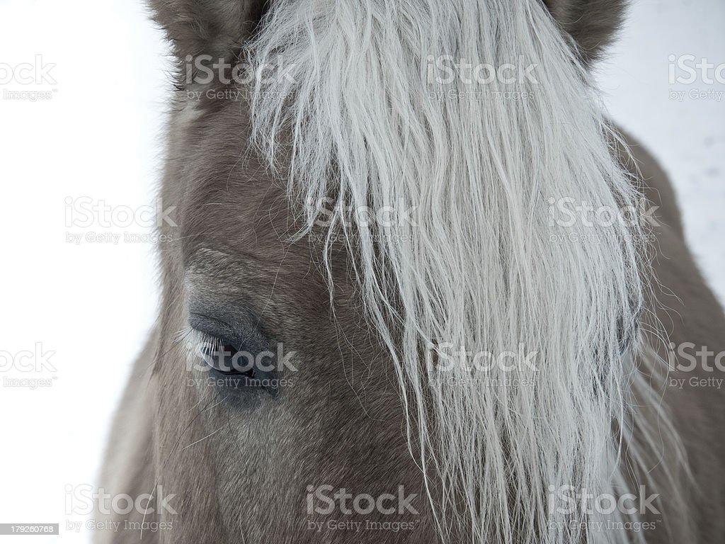 horse detail stock photo