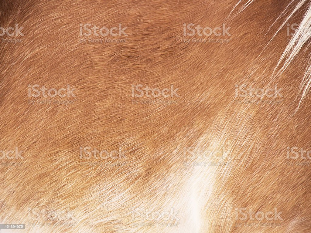 Horse detail royalty-free stock photo