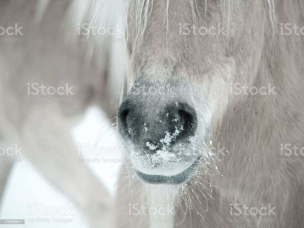 horse detail stock photo