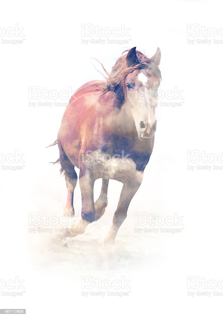 Horse. Double exposure stock photo