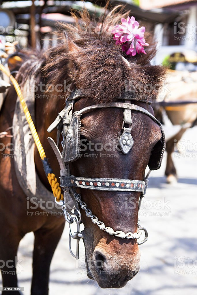 horse drawn carriage in the old spanish royalty-free stock photo