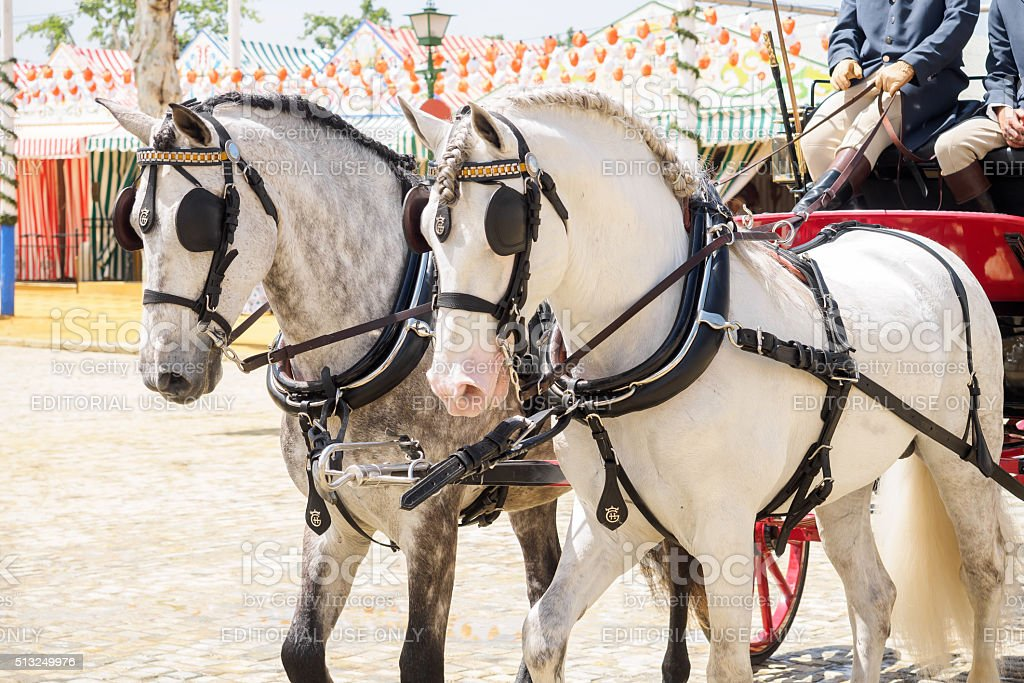 Horse drawn carriage on the Fair of Seville stock photo