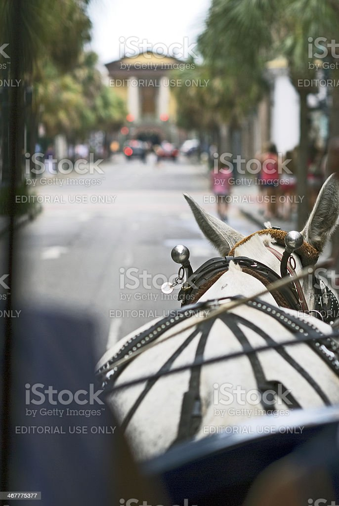 Horse Drawn Carriage Ride royalty-free stock photo