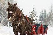 Horse drawn sleigh in snow