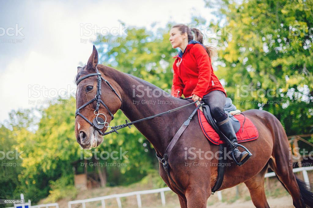 Horse dressage on show jumping terrain stock photo