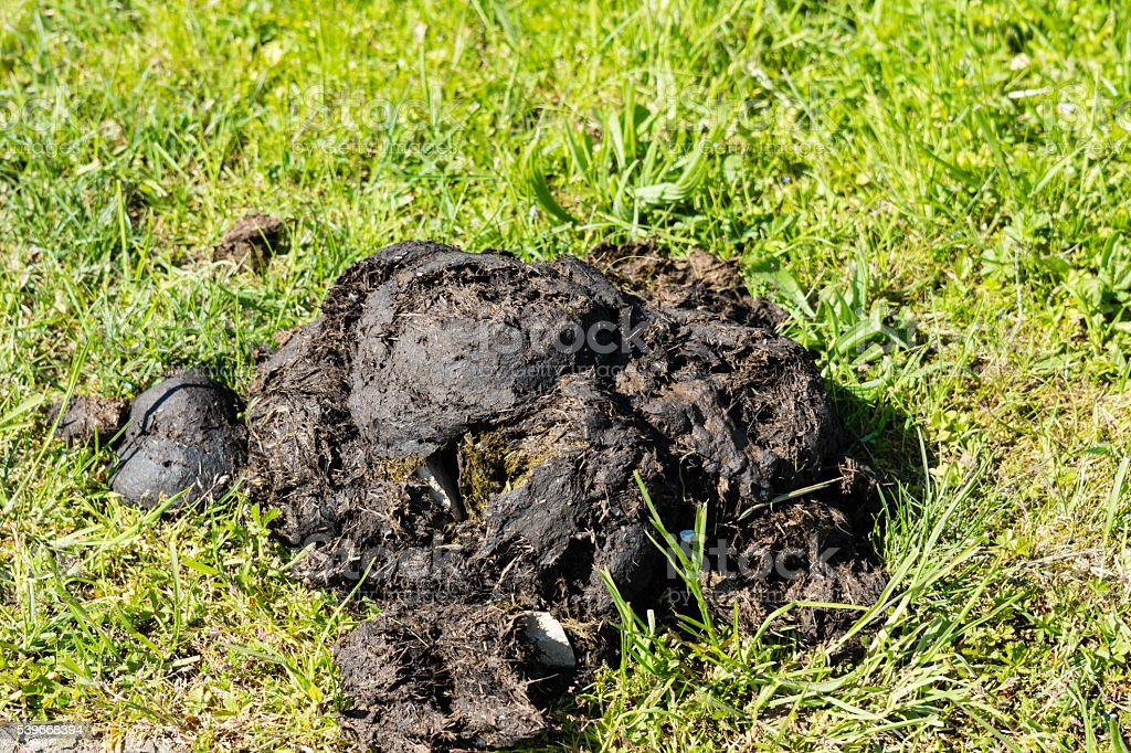 Horse droppings stock photo