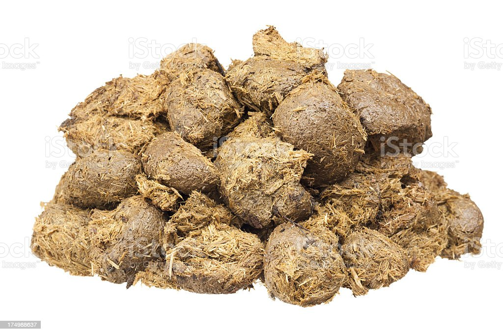 Horse dung isolated on white stock photo