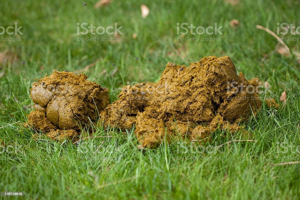Horse Dung royalty-free stock photo
