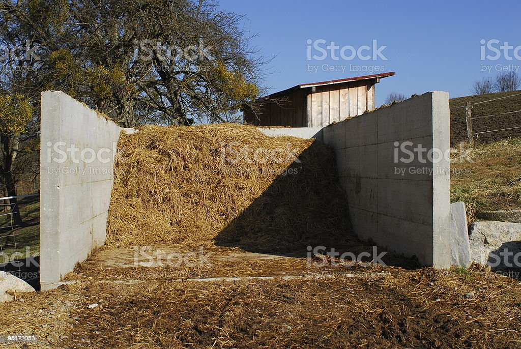 Horse Dung stock photo