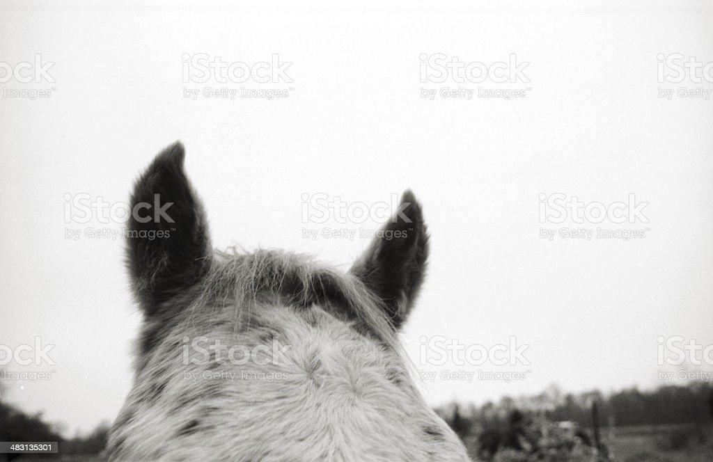 Horse Ears stock photo