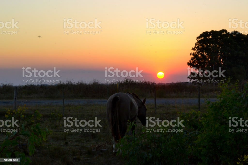 Horse eating and sun going down behind, rural field stock photo