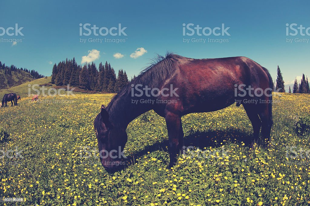 horse eating grass on beautiful mountain grassland stock photo