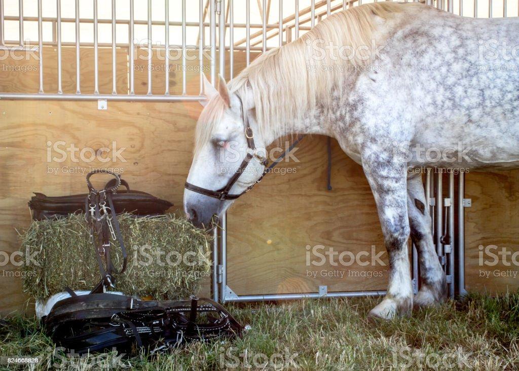 Horse eating Hay stock photo