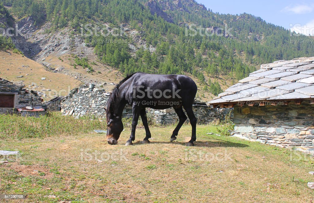 horse eating in the meadow in front of mountains, stock photo