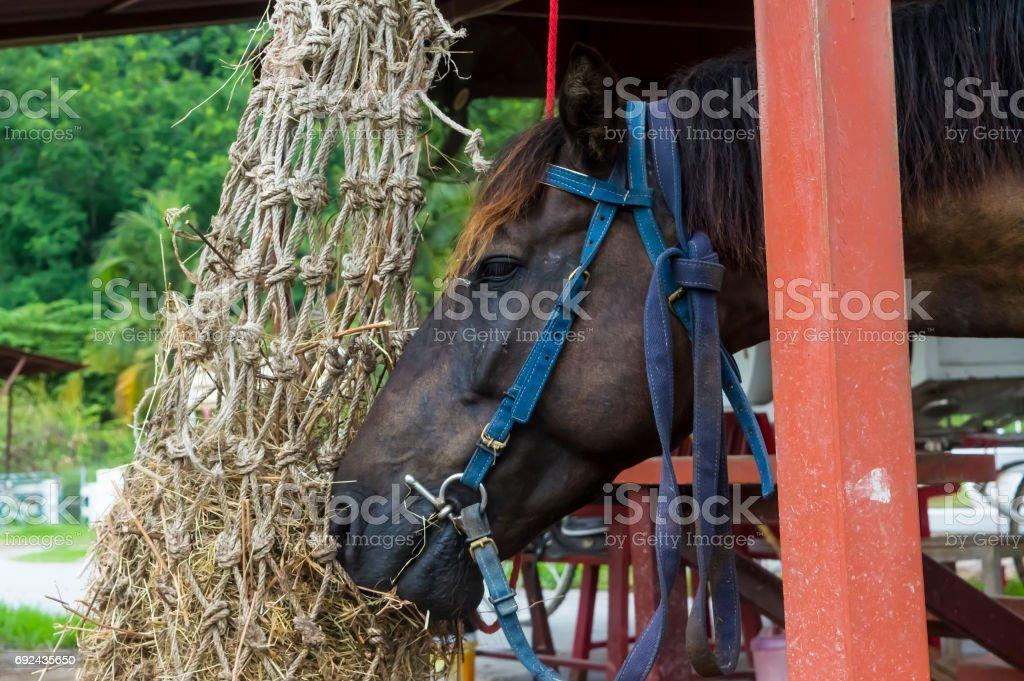 Horse Eating stock photo