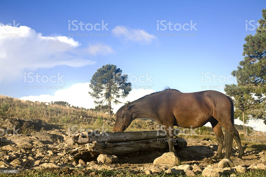 Horse Eating royalty-free stock photo