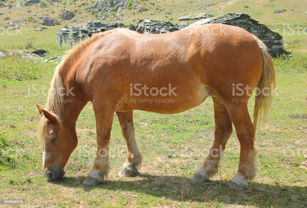 horse eating the grass stock photo