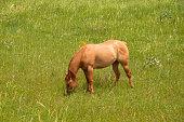 Horse eats grass in meadow
