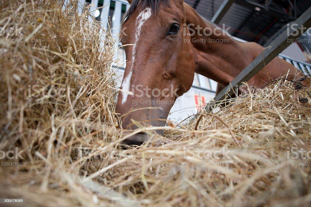 Horse eats hay from rack stock photo