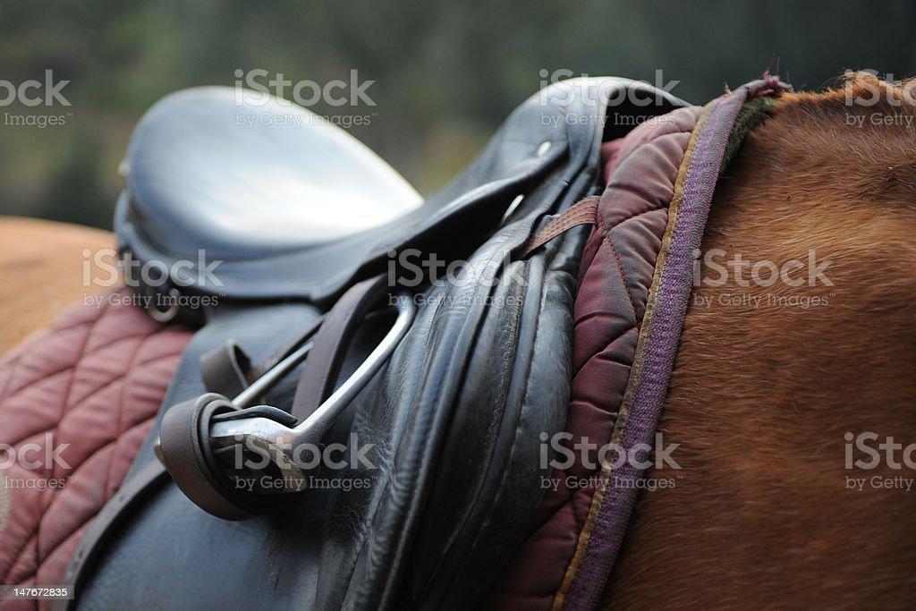 Horse English Seat stock photo