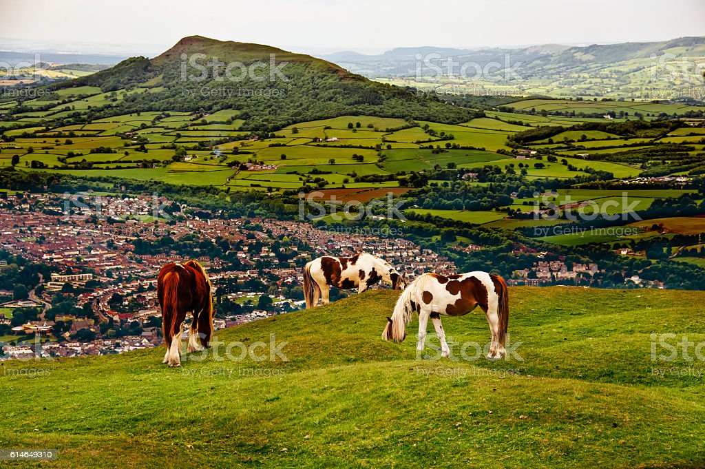 Horse enjoy eating grass stock photo