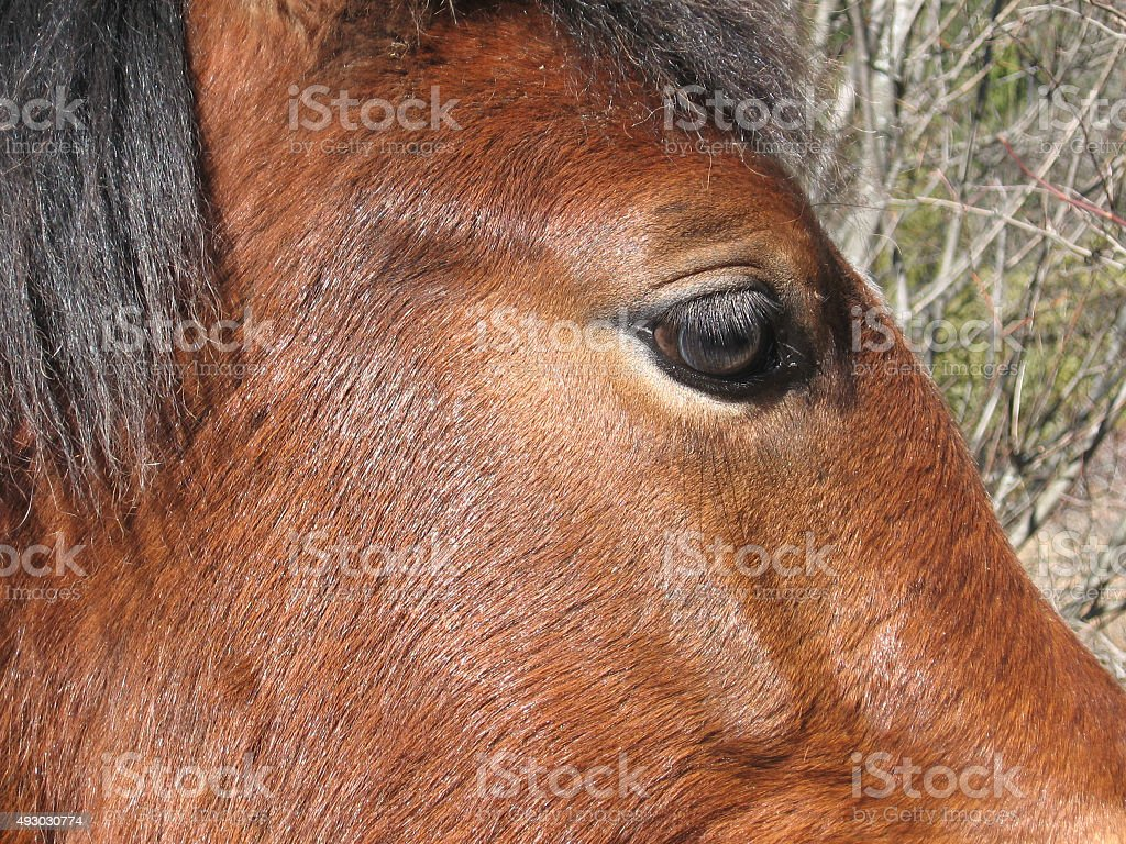Horse eye and profile royalty-free stock photo