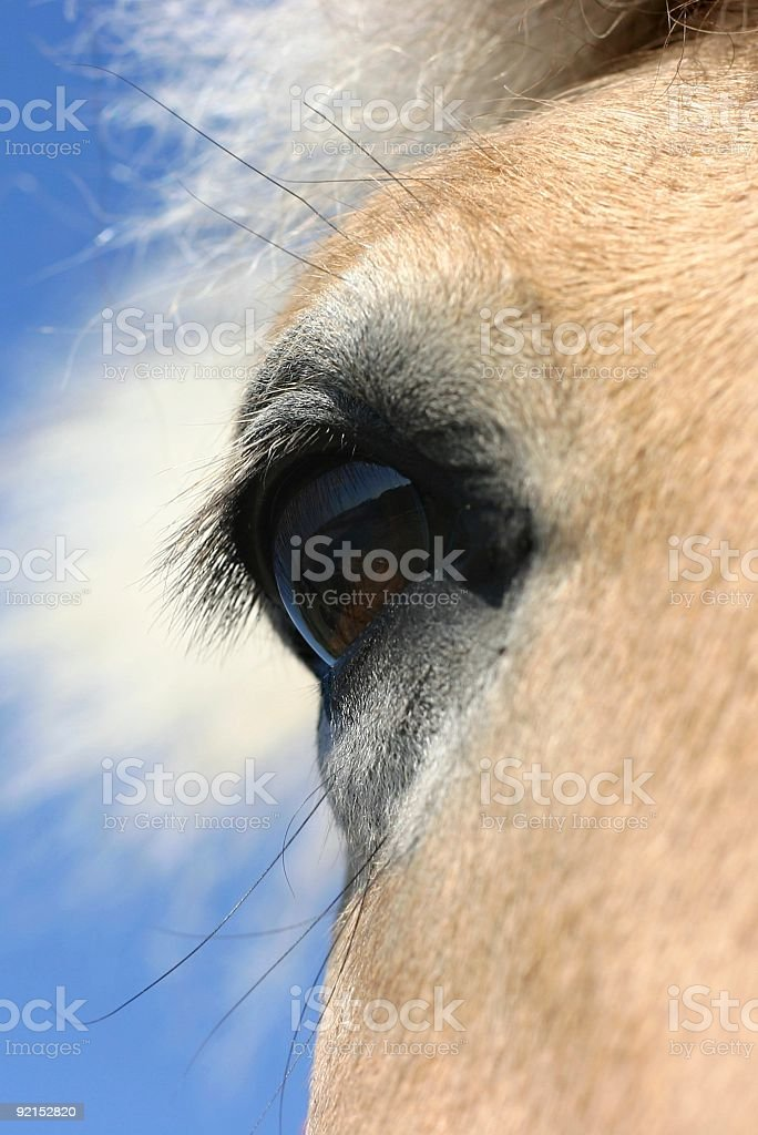 Horse eye - blue sky royalty-free stock photo