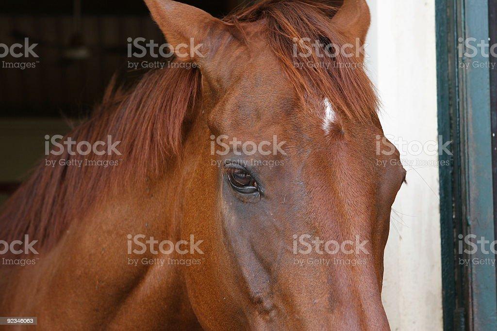 Horse Eye Close Up royalty-free stock photo