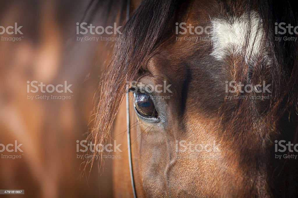 Horse eye closeup stock photo