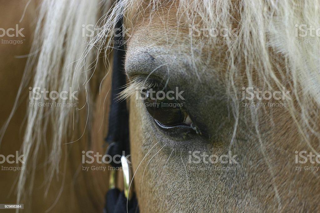 Horse eye detail royalty-free stock photo