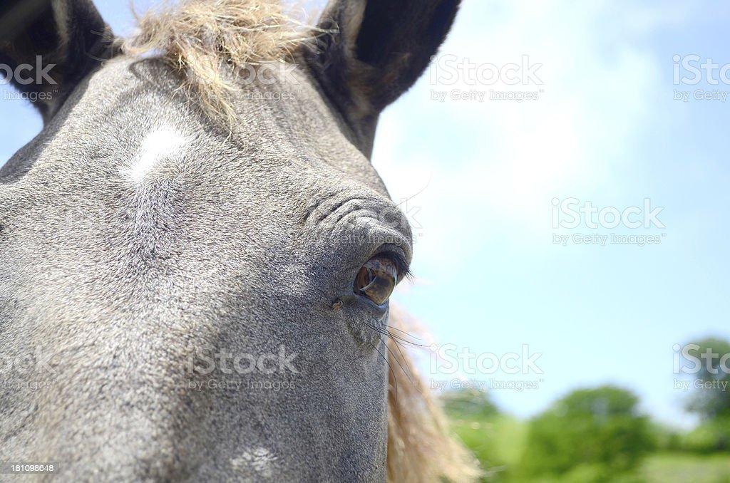 horse eye royalty-free stock photo