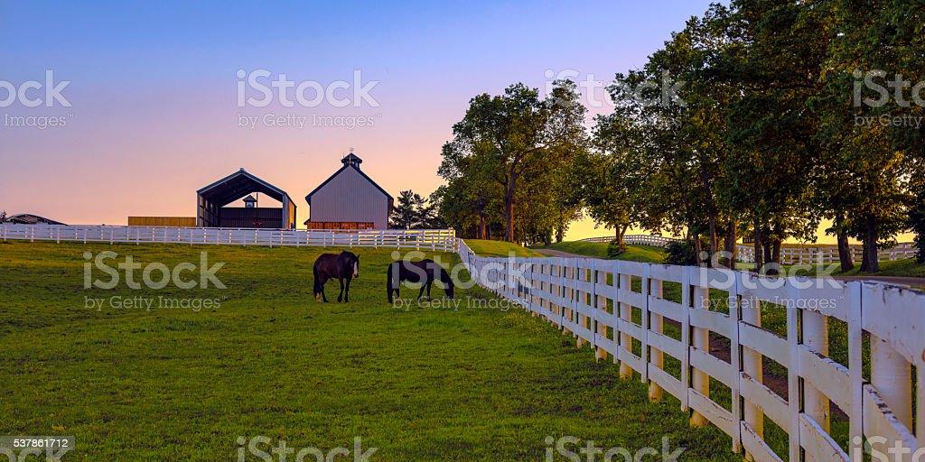 Horse farm at dawn stock photo