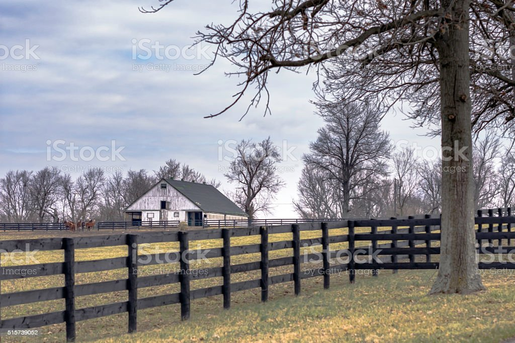 Horse farm in Kentucky stock photo