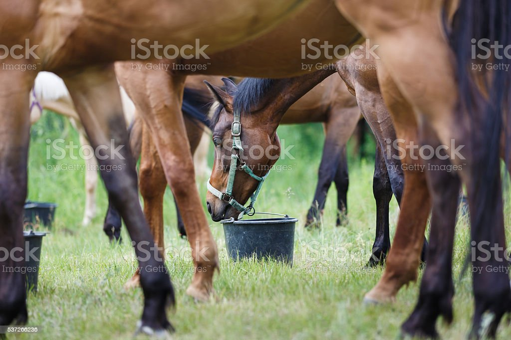 Horse feeding on the meadow stock photo