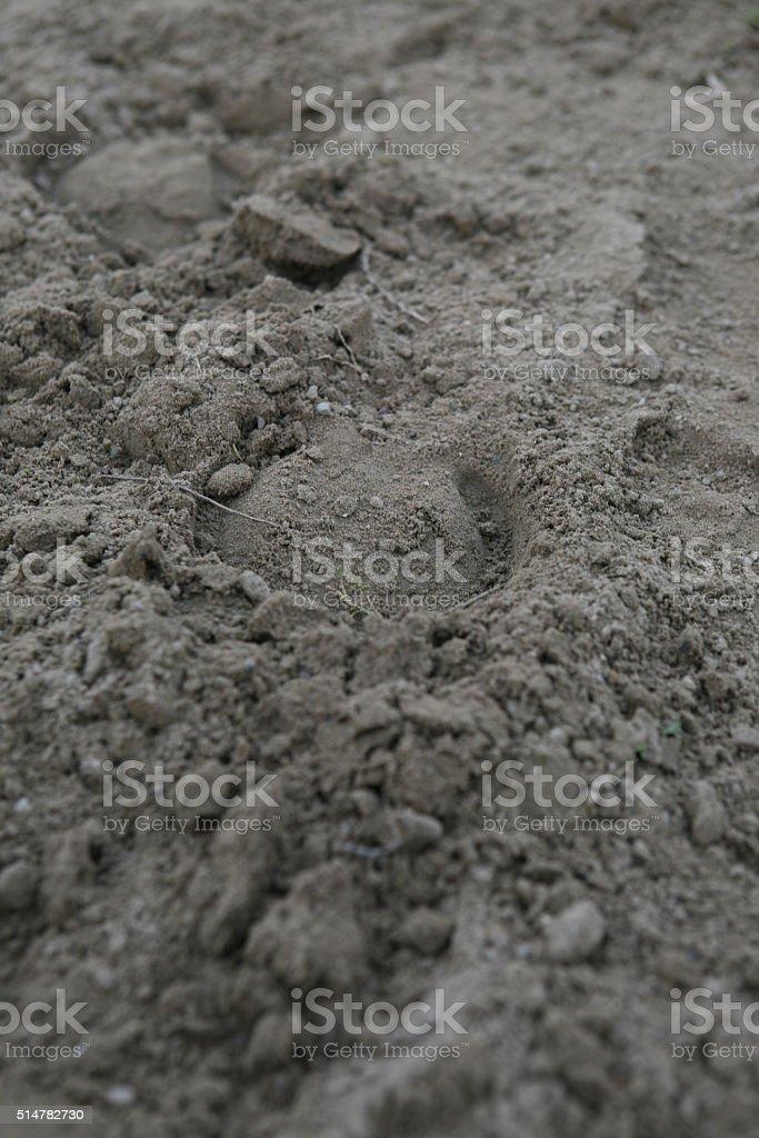 Horse footprint stock photo