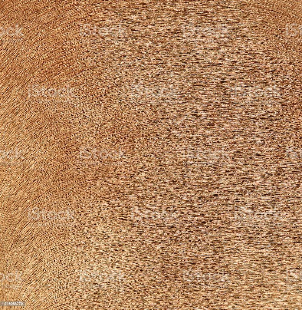 Horse Fur stock photo