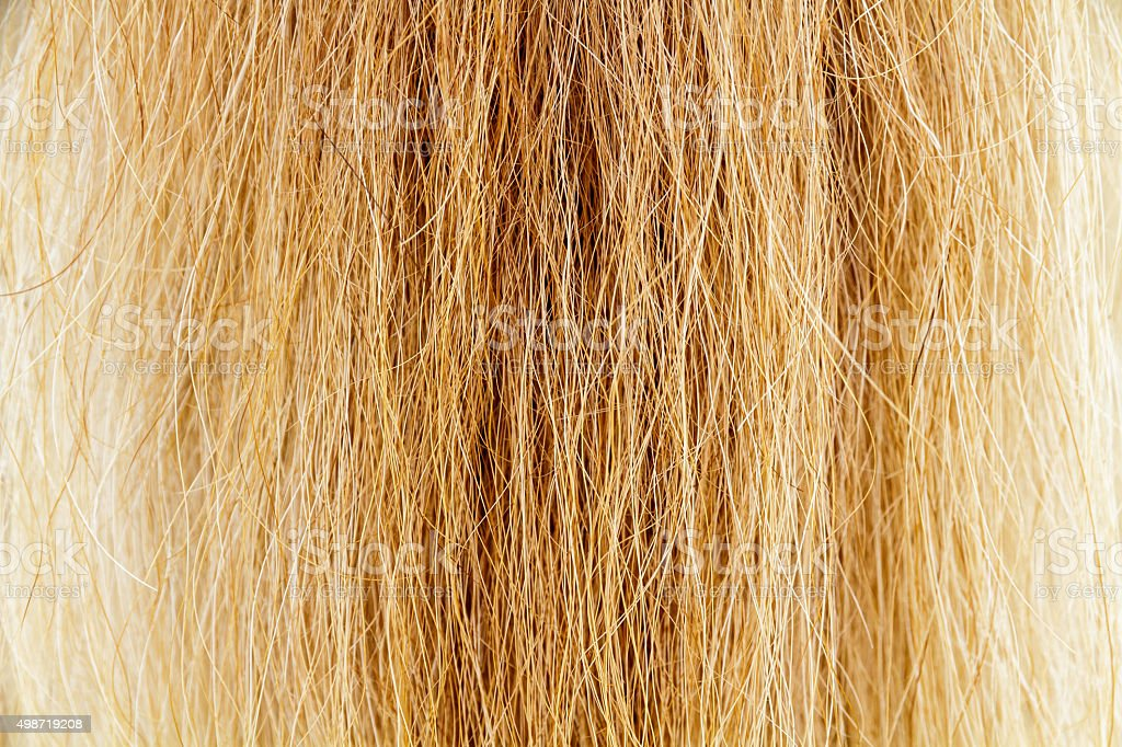 Horse fur tail stock photo